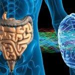 Zdravo črevo je ključ do zdravih možganov