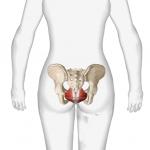Kako ozavestiti mišice medeničnega dna?